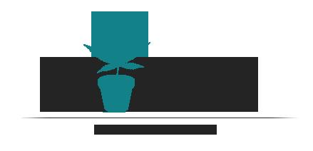 Weed Seeds Online Store